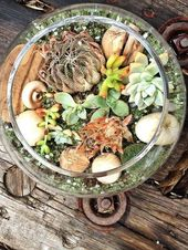 Succulent Terrarium DIY