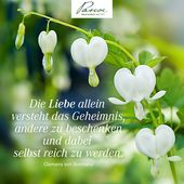 #Zitat #Zitate #Liebe #grünweiss #Herz #Natur