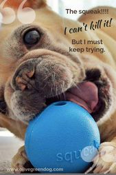 Pin On Dog Play And Toys
