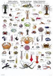 Molluscs Crustaceans Crustaceans Molluscs Marine Life