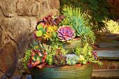 Succulent Container Gardens That Still Look Good Even If It's Pushing Triple Digits Out There  – Gardening unit