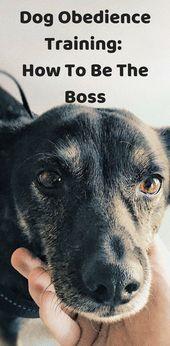Boss Dog Obedience Training Dog Training Agility Training