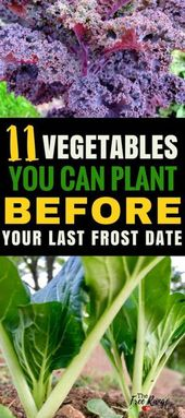 11 Vegetables You Can Plant BEFORE the Last Frost   – gardening