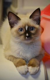 Thoughtful Kitty – 22nd October 2014