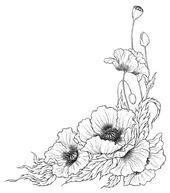 Mohn Strichzeichnung Blumen Strichzeichnung Illustration Blume Blumenzeichnung