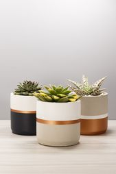 Concrete Succulent Planter #indoorplanter #concret…