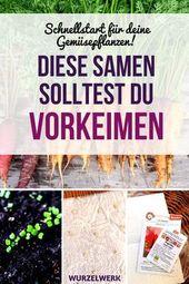 Samen vorkeimen: Schnellstart für deine Gemüsepflanzen – Wurzelwerk – haus