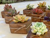 10 Succulent WEDDING Favors, Bridal Shower favor, Baby shower, holiday table, party, craft, cowrker gift, birthday, school, bat mitzvah