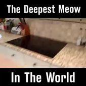 Zehn himmlische Gründe, warum Katzen großartige Haustiere sind #cat #catlover #catfacts #ilovecats #cats