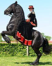 Pin Von Rosenrot Auf Amelia Pferd Und Reiter Reiten Pferde