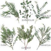 Types of eucalyptus #arten #eukalyptus #arten #eukalyptus …- types of eucalyptus …  – hochzeitsdekoration