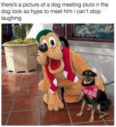 ROFL Los perros graciosos tan divertidos me hacen reír   – Random