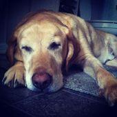 Let Sleeping Dogs Lie Good Advice Sleeping Dogs Dogs Cute Animals