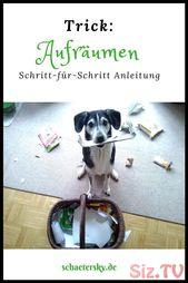 Trick Aufr  umen Trick Aufr  umen Sylvia Reber Save Images Sylvia Reber Lustige …