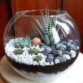Kleiner Garten in einer Glasschüssel – Arrangementideen mit Sukkulenten