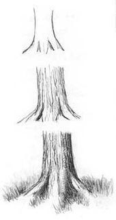 Einen Baum, Bäume, Wald zeichnen Anleitung –Diane Wright #drawings #art