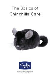The Fundamentals of Chinchilla Care