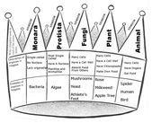 Kingdoms of Life Notes