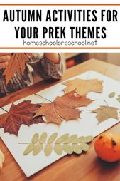 Our Favorite Activities for Building a Fall Preschool Theme – Homeschooling