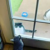 So funny Fight Cats Vid