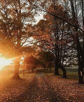 (notitle) – Autumn
