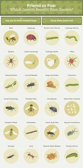 Tout ce que vous devez savoir pour vous débarrasser des parasites communs du jardin   – Gardening