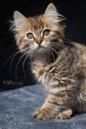 Die süße Anju aus Sinthari ist jetzt 12 Wochen alt und sehr …