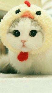 Die meisten bezaubernden 10+ Katzenkostüme werden…