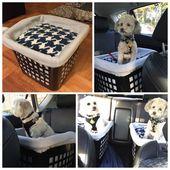 Accesorios para perros sangrientos #doggies #AccesoriosPerroDiyCarSeats   – Accessories Dog Diy Car Seats