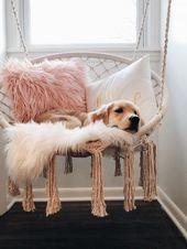 3 Ways To Get Your Dog To Sleep In On Weekends – #dog #sleep #Ways #Weekends