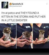 32 Cat Memes, um sicherzustellen, dass Sie einen fabelhaften Caturday haben – Ti…