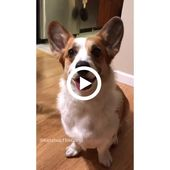 Fetching balls? Nah, too basic.⠀ Grab me a cold one please #videos #cutepets #funny #LOL #animals