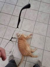 Friday Funny Cats (20 photos) – Page 3 of 10
