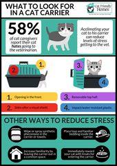 Befolgen Sie die folgenden Tipps, damit sich Ihre Katze mit ihrem Träger wohler fühlt: Le …