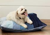 DIY Dog Turn Your Old Jeans into an Adorable DIY Dog Bed