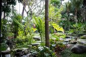 Lush tropical garden with colorful flowers and plants. Bali Island, Ind … …  – Garden DIY Projects
