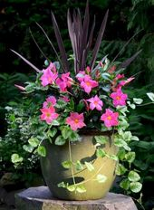38 fabulous summer season container backyard flowers concepts – HomeSpecially
