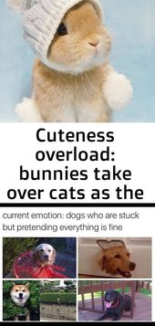 Cuteness overload: bunnies take over cats as the cutest pet 7