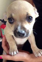 Craigslist Sacramento Pets For Sale