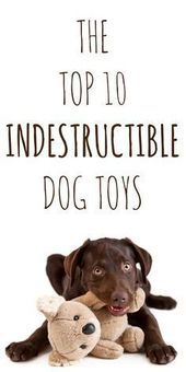 New Dog Training Ideas Click The Image For Various Dog Care And