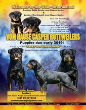 Vom Hause Casper Rottweilers Grants Pass Oregon 1 541 218 7087