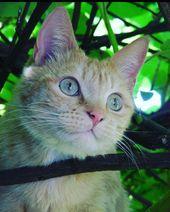# Katzen # catsofinstagram # catlover # kitty # meow # catoftheday # nature # tree # photography # su …
