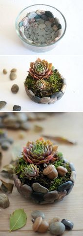 25 DIY succulent garden ideas and instructions