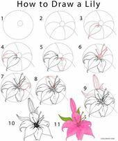 Wie zeichnet man eine Lilie? Schritt für Schritt Anleitungen mit Bildern zeichnen.