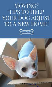 Ziehen um? Tipps, die Ihrem Hund dabei helfen, sich auf ein neues Zuhause einzustellen! – Stolze Hundemama   – Moving On Up
