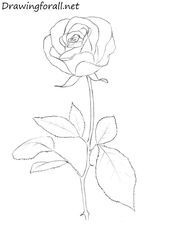 Schritt für Schritt zum neuesten No-Cost-Rose-Zeichnen Beliebt In dieser Klasse werden wir untersuchen, wie Sie mithilfe von Pastellfarben eine Steigerung erzielen können. Wir sind ap …