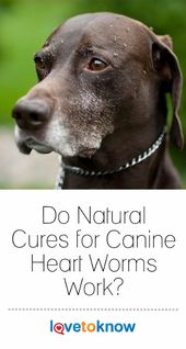Take Heart How To Protect Your Best Friends From Heartworm Dogs