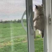 Dale título a este truco Qué lindo es ella Imágenes divertidas de gatos Video Memes Citas para amantes de gatos   – Bewegliche-Bilder