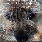 Birthday Wishes Border Terrier Sniffing Around Humor By Mary Taylor Border Terrier Birthday Wishes Terrier