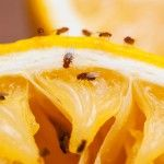 In 5 Schritten Zum Duftenden Badezimmer Helpling Blog Fruchtfliegenfalle Fruchtfliegen Was Hilft Gegen Fruchtfliegen